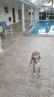 Stamped Concrete Cocoa Beach